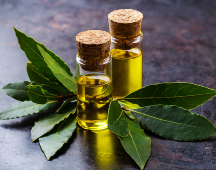 Laurus Nobilis Essential Oil