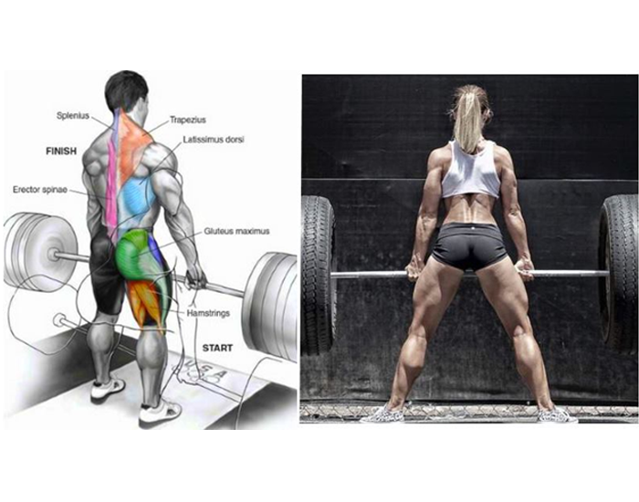 Deadlift one of the best hamstring exercise