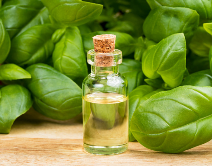Basil-Essential-Oil