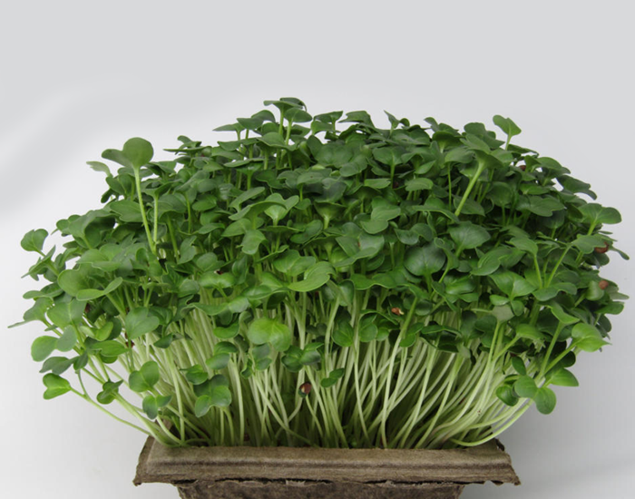 Power Packed Microgreens