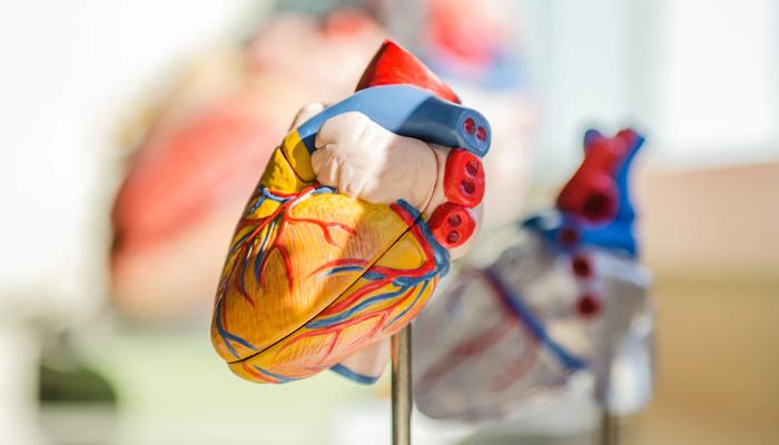 improve cardiovascular health