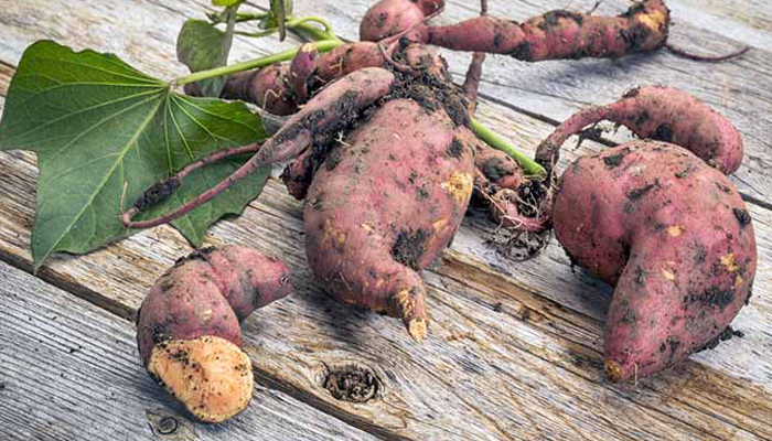 Sweet Potatoes Prevents Heart Disorders